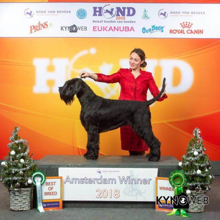 Ariel Pluri campionessa femmina Schnauzer gigante